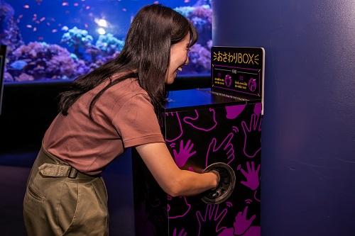 写真・図版 : おさわりBOXに手を入れるのは、なんとなく恥ずかしい=サンシャイン水族館提供