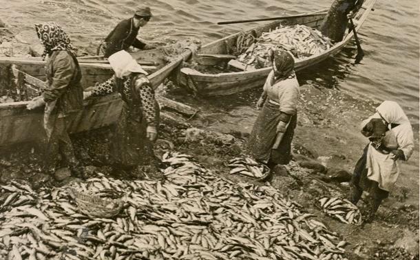 写真・図版 : 1946年撮影のニシン漁。この頃、北海道のニシン漁獲高は30万トンほどだったが、1990年代以降は毎年2000~3000トンほどで推移している。