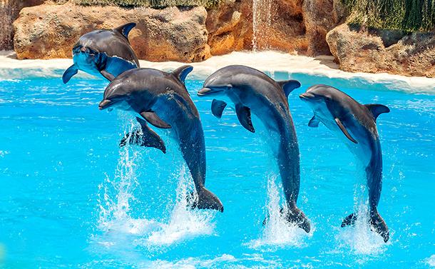 写真・図版 : 海外ではイルカショーをやめる施設も出ている Svetlana Turchenick/shutterstock.com