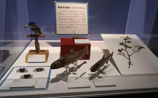 写真・図版 : 童話「やまなし」に出てくる動植物の標本。これら以外に実物や映像で展示されているものもある
