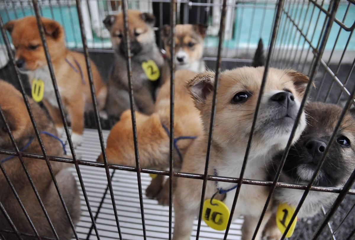 写真・図版 : 譲渡会で「飼い主」となる人を待つ子犬たち