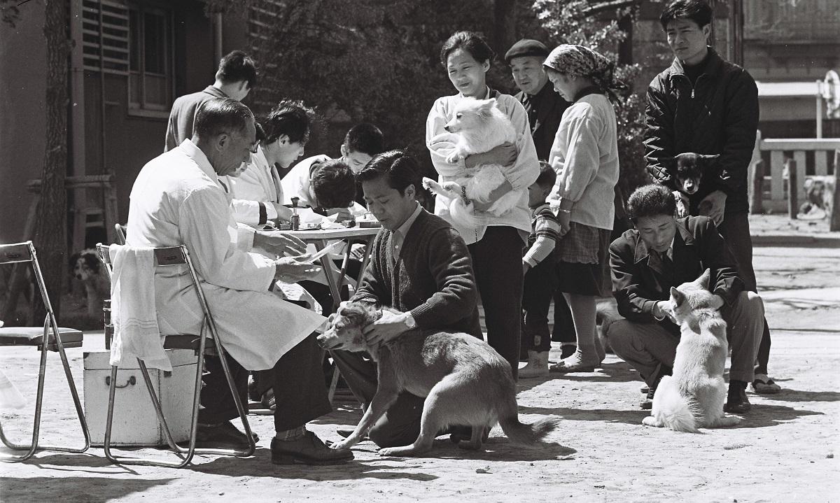 写真・図版 : 狂犬病予防法に基づいて狂犬病の予防接種が義務づけられた=1966年、東京都内