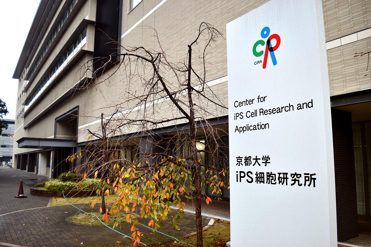 写真・図版 : 京都大学iPS細胞研究所(CiRA)
