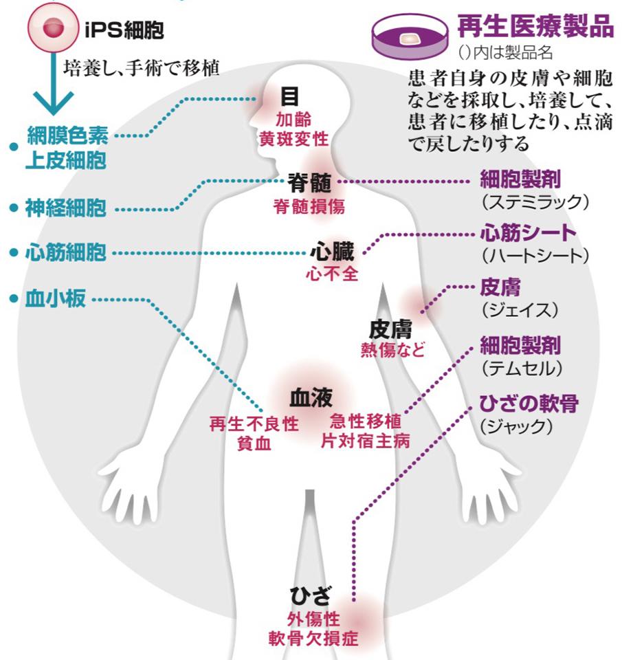 写真・図版 : 日本の国家戦略としての再生医療