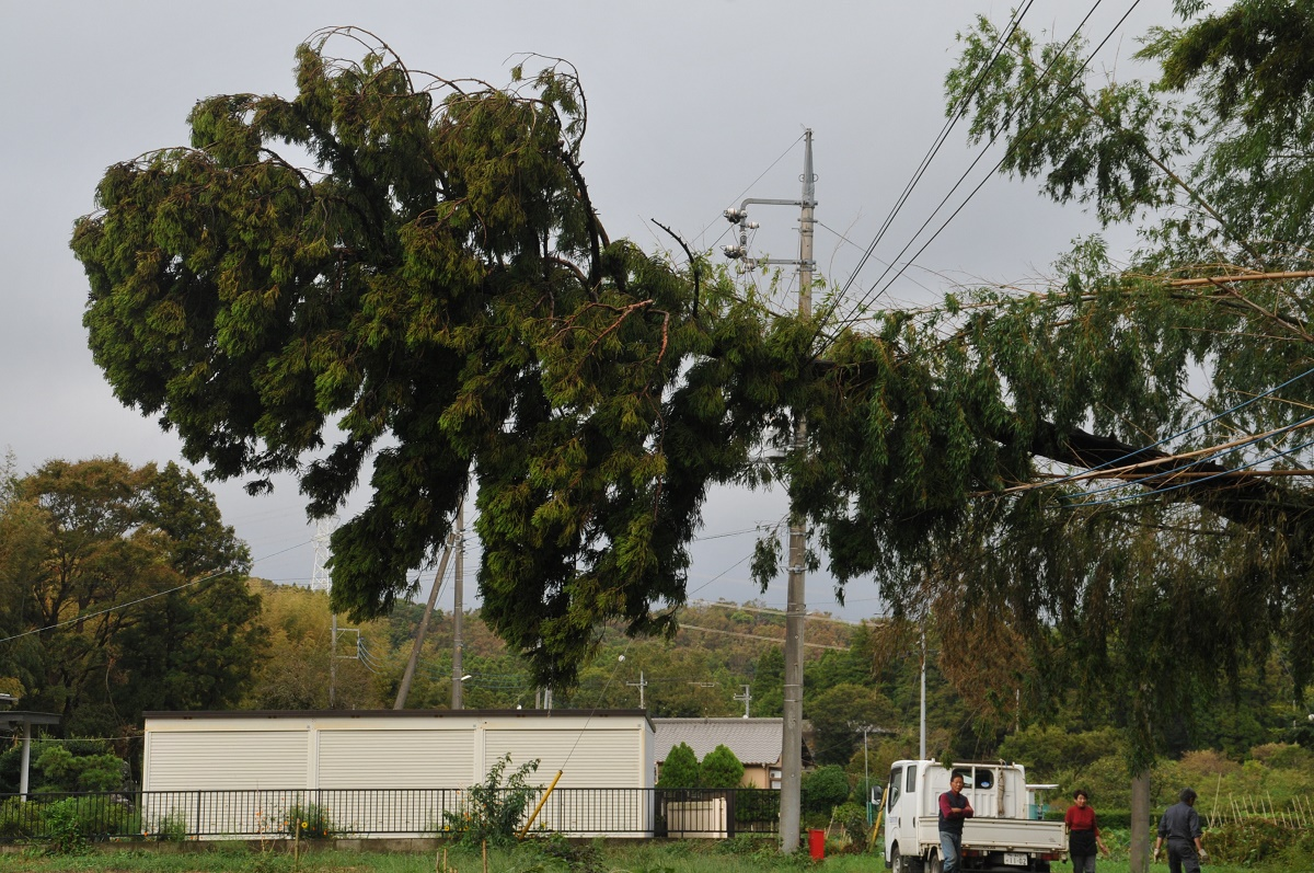 写真・図版 : 大木が電線に倒れかかり、周辺の住宅では停電が続いた=2019年9月16日、千葉県市原市