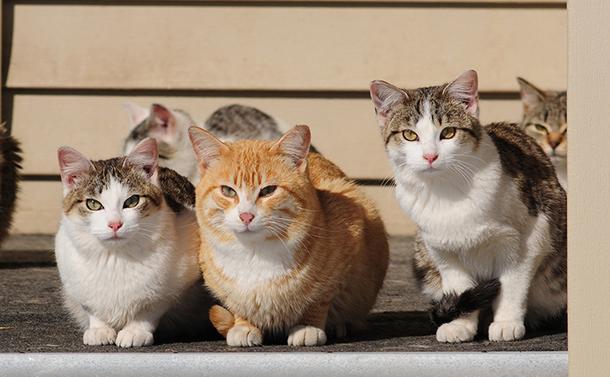 身寄りなきネコが問いかける「動物愛護法の矛盾と欠陥」