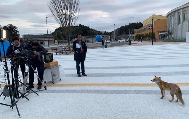 写真・図版 : JR双葉駅前で、キツネに出合った!=撮影・池田裕行