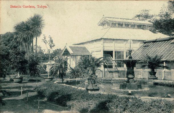 写真・図版 : 完成して間もないころの洋式温室=大正初期の絵はがき、小石川植物園所蔵