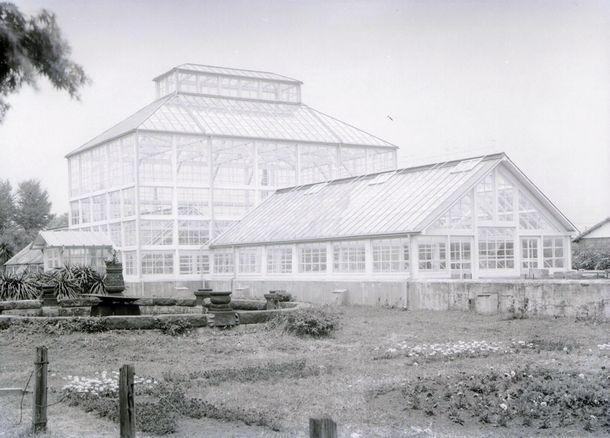 写真・図版 : 戦後に木造で復旧したころの温室=東京大学総合研究博物館所蔵
