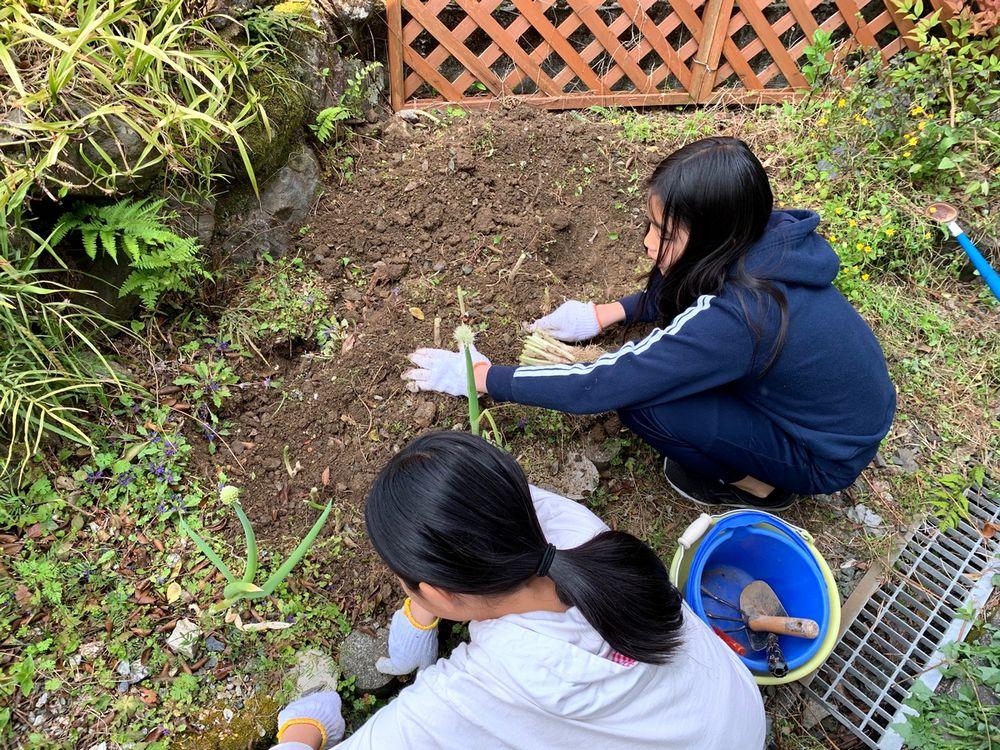 写真・図版 : ネギを植える娘たち(筆者撮影)