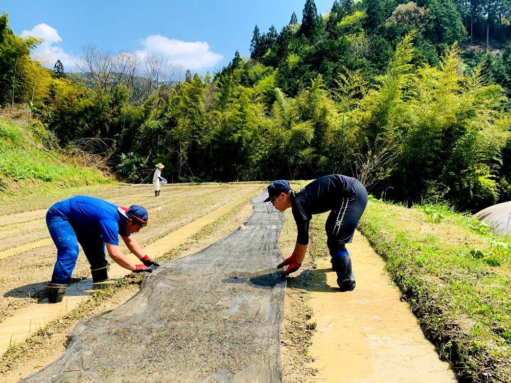 写真・図版 : 農作業に挑戦する地元の中高生(筆者撮影)