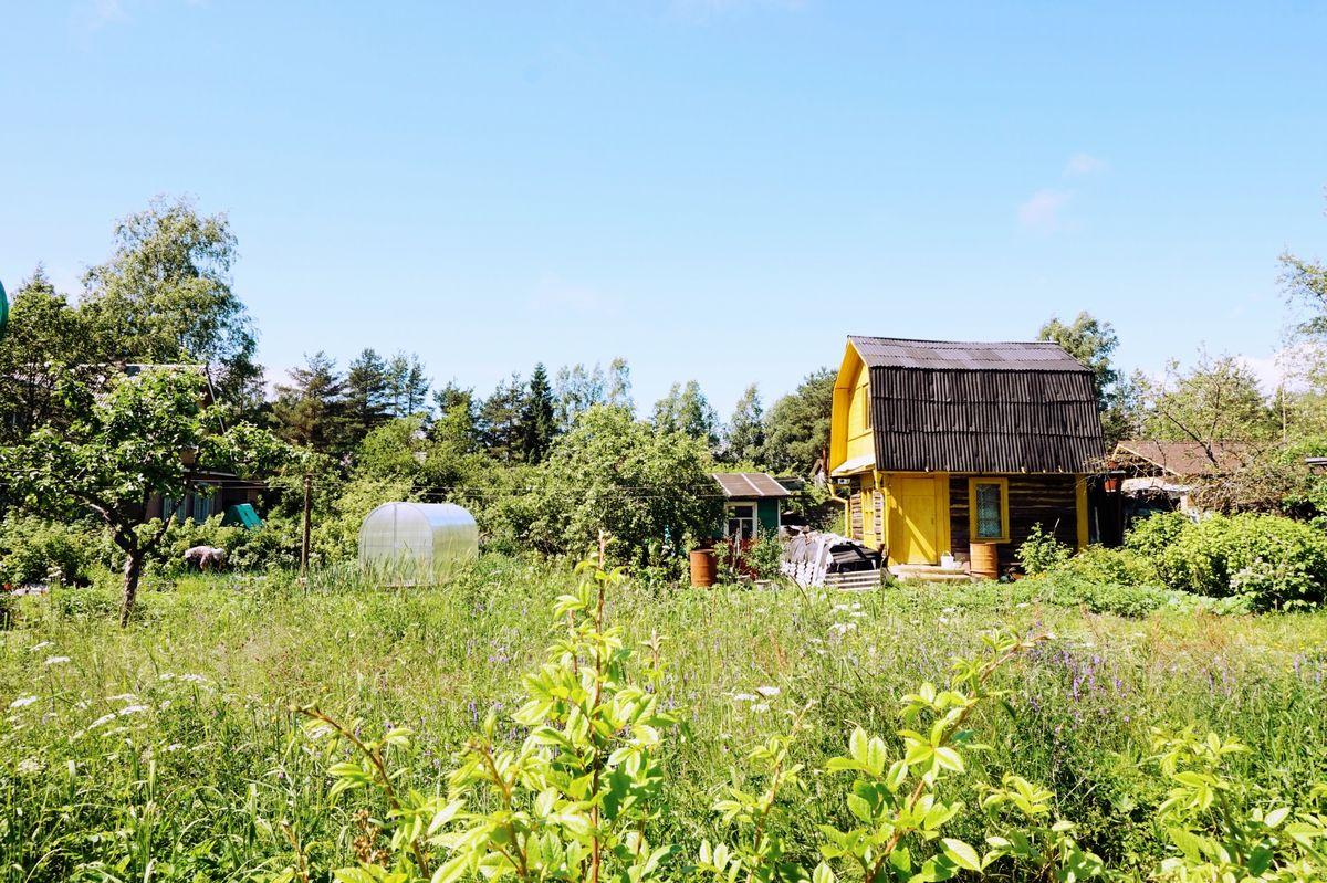 写真・図版 : ロシア国民の約8割が所有している「ダチャ」と呼ばれる別荘