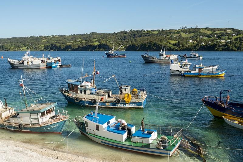 写真・図版 : チロエ島は漁業が盛んだ。湾には多くの漁船が浮かんでいる=筆者撮影