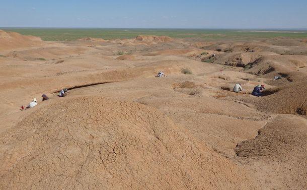 写真・図版 : モンゴル・ゴビ砂漠でテリジノサウルス類の集団営巣跡が見つかった場所。人のいる部分に巣化石があった=小林快次さん提供