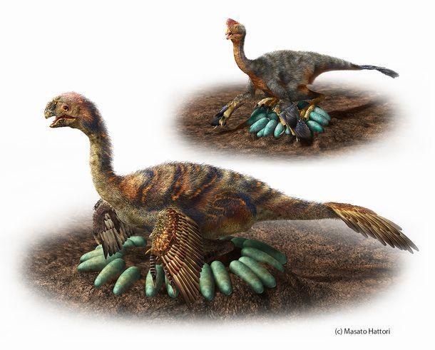写真・図版 : オビラプトロサウルス類の営巣復元図。小型種(上)は卵の上に直接座ったと考えられるが、大型種(下)は卵を並べた中心に座ったと考えられる=服部雅人さん提供