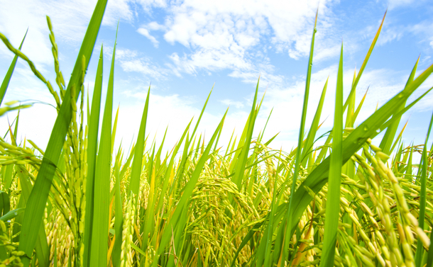 写真・図版 : wasanajai/Shutterstock.com