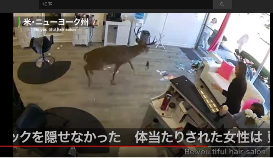 写真・図版 : アメリカ・ニューヨーク州で、シカがヘアサロンの入り口を突き破り、店内に飛び込んできたニュースを伝えるFNNプライムオンライン=youtubeより