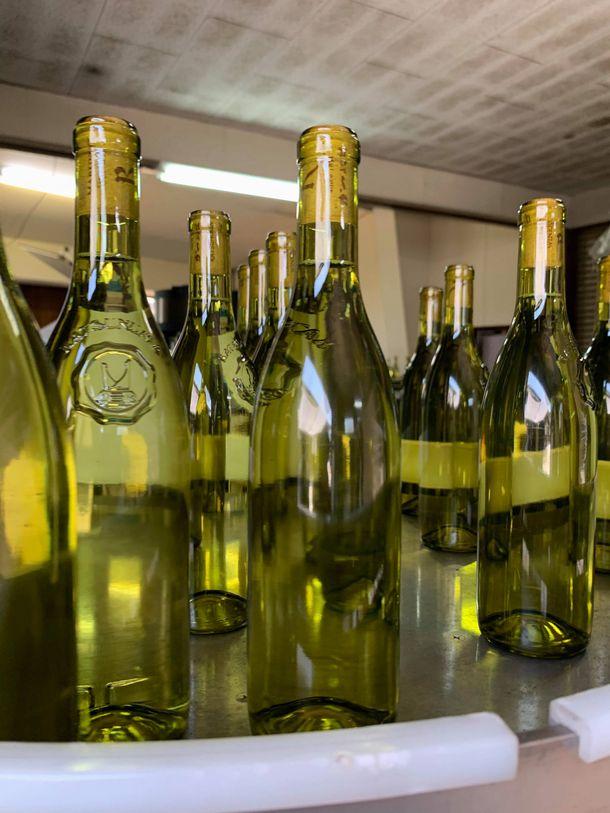写真・図版 : ワインが動かないので、瓶詰めしたくてもできないワイナリーや、リリースを遅らせるところも=大木貴之さん撮影