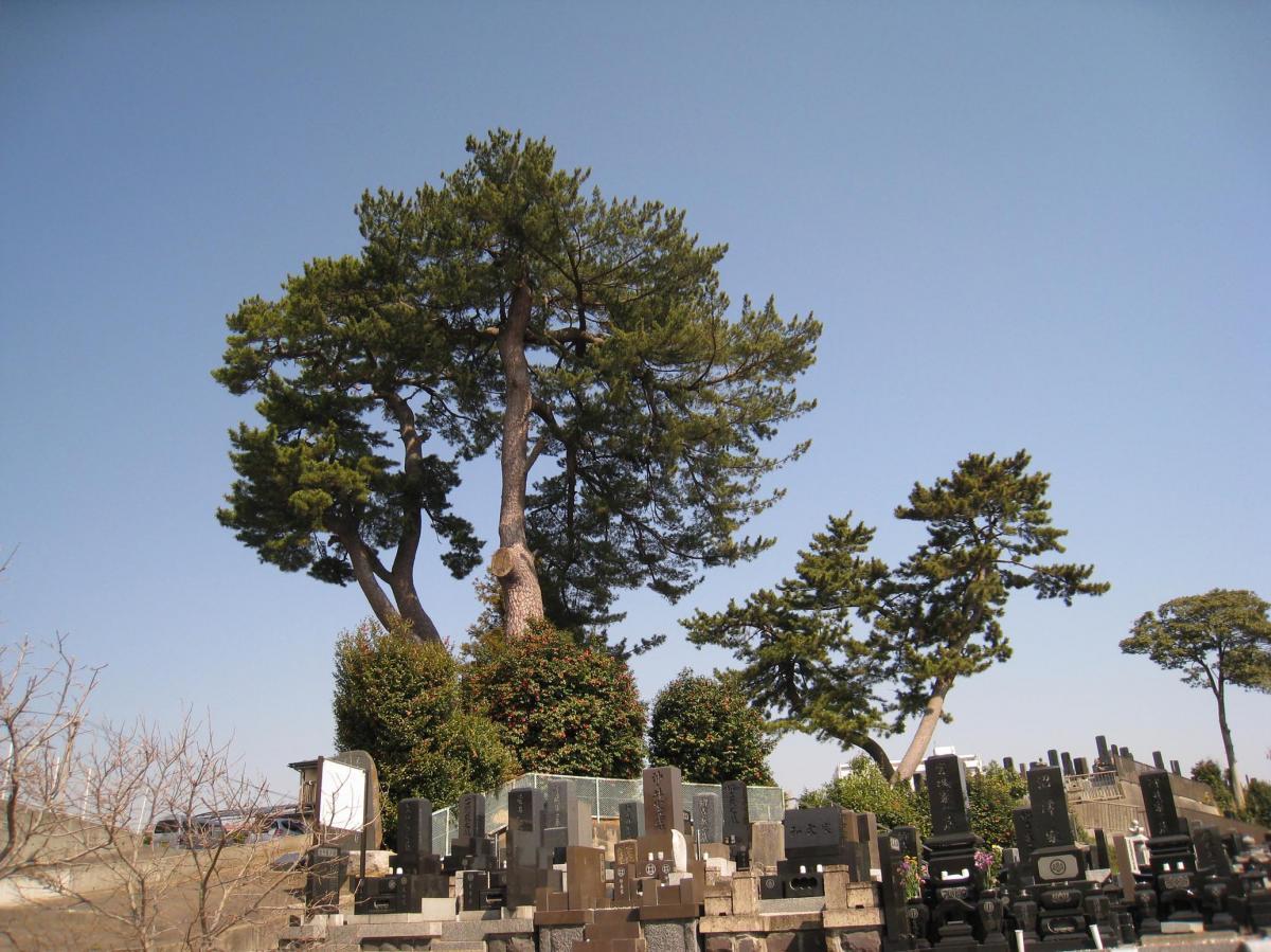 写真・図版 : 「おくのほそ道の風景地」の一つとして国の名勝にも指定されている「末の松山」=宮城県多賀城市