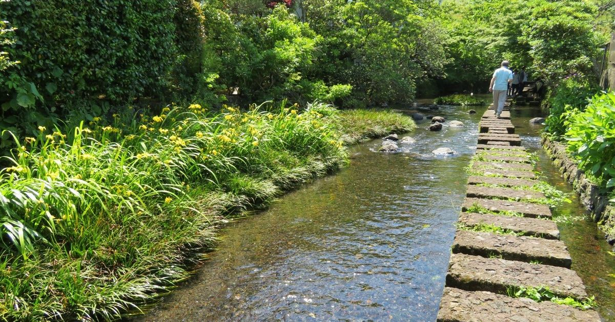 写真・図版 : 源兵衛川の「川のみち」。飛び石の上をソーシャルディスタンスで歩ける