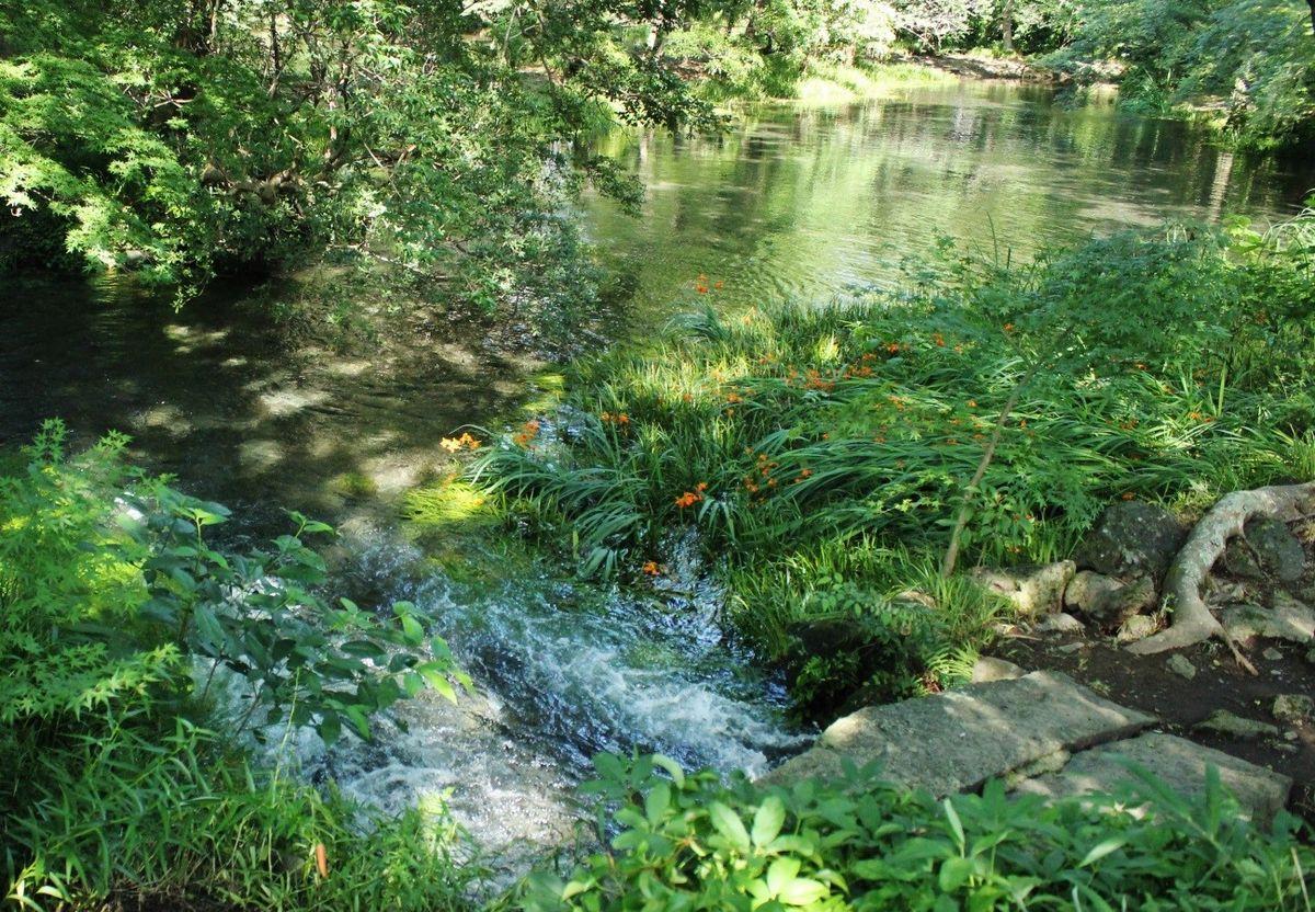 写真・図版 : 湧水が勢いよく流れ出ている「中の瀬」(筆者撮影)