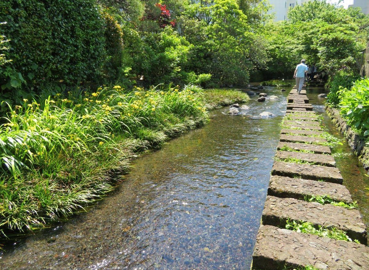 写真・図版 : 源兵衛川の「川のみち」。飛び石の上をソーシャルディスタンスで歩ける(筆者撮影)