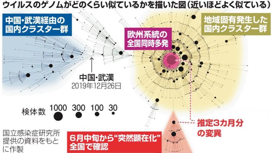 写真・図版 : ウイルスのゲノムがどのくらい似ているかを描いた図