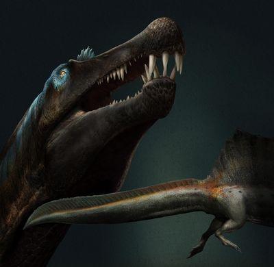 写真・図版 : 新しい化石をもとにしたスピノサウルスの想像図。細長い口と鋭い歯を持ち、長い尾は幅広く、背中には帆のような構造があった=Davide Bonadonna画、国際研究チーム提供