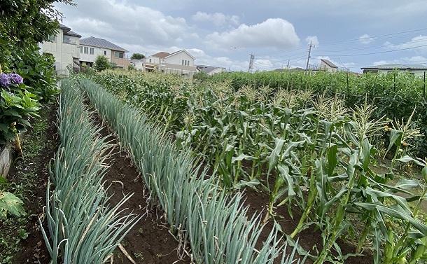 練馬で同時に進む脱農業化と再農業化――街に緑は戻るか