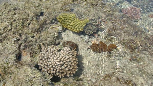 写真・図版 : 那覇空港第二滑走路建設のために埋め立てられた大嶺海岸のサンゴ礁(2010年10月撮影)