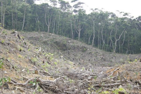 写真・図版 : 皆伐が進められ赤土流出が進むヤンバルの森(筆者撮影)