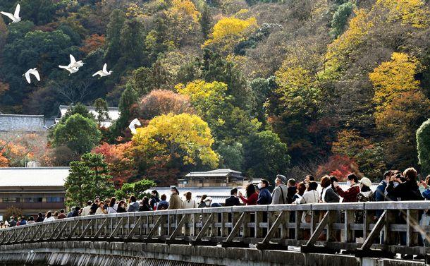 写真・図版 : コロナ禍の中、紅葉が見ごろを迎えて多くの観光客でにぎわう京都・嵐山の渡月橋=2020年11月21日、筋野健太撮影
