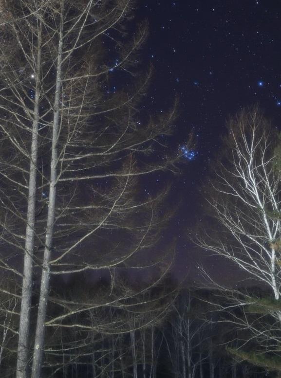 写真・図版 : 写真3:白樺林の向こうに見える六連星(昴)=畑英利撮影