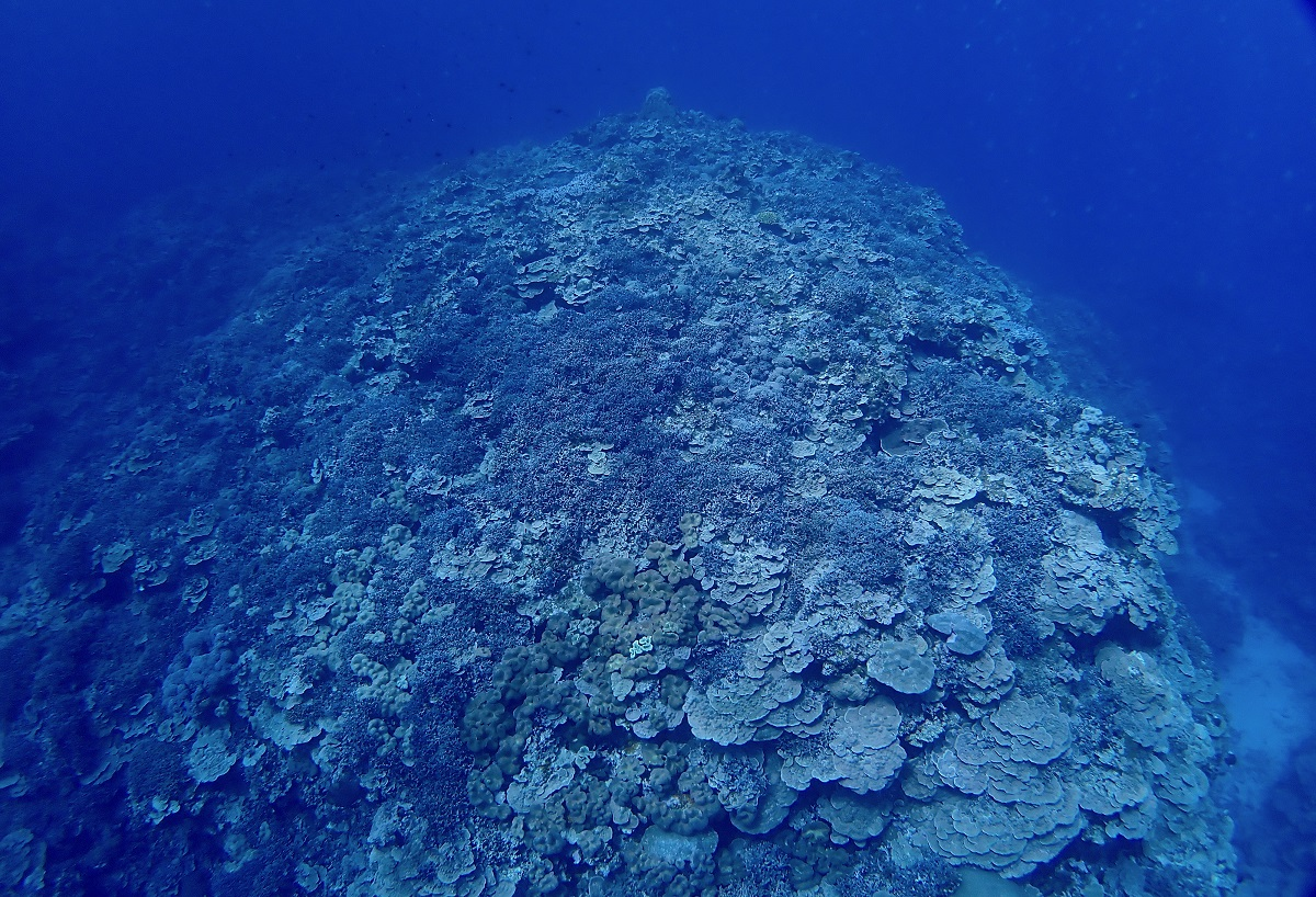 写真・図版 : 埋め立てが進む場所からおよそ2キロの場所にあるサンゴの群生(筆者撮影)