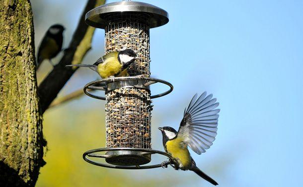 軽く扱われてしまう「鳥」の命をめぐって
