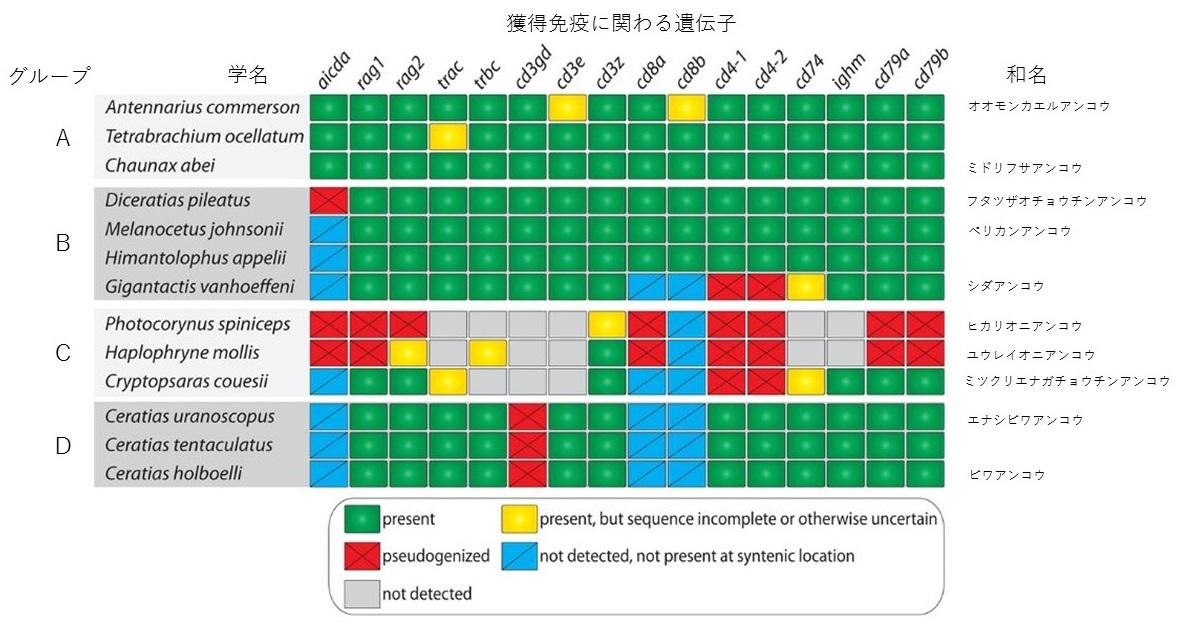 写真・図版 : 研究された13種における遺伝子の状態。緑は正常な遺伝子があったが、他の色では異常が見られた=研究チームの論文から抜粋して改変