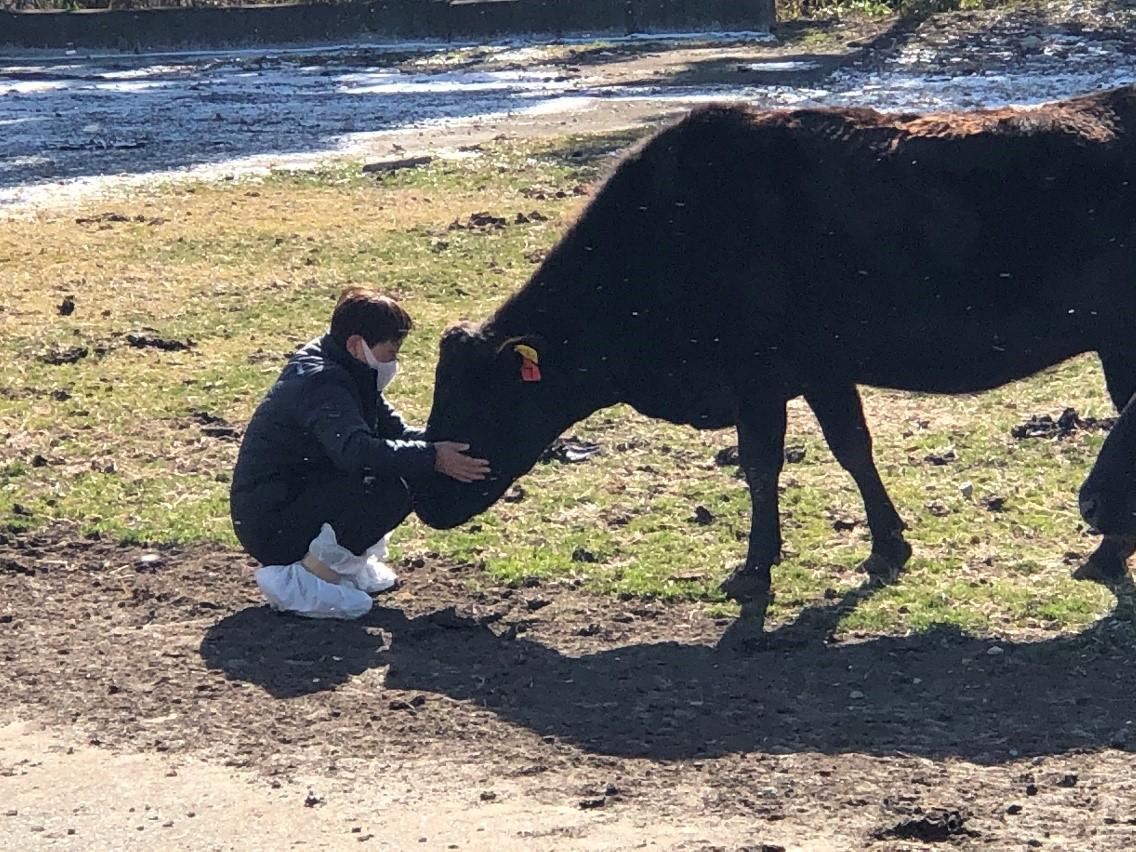 写真・図版 : かつての飼牛と再会した鵜沼久江さん=2021年2月9日、福島県双葉町、撮影・筆者