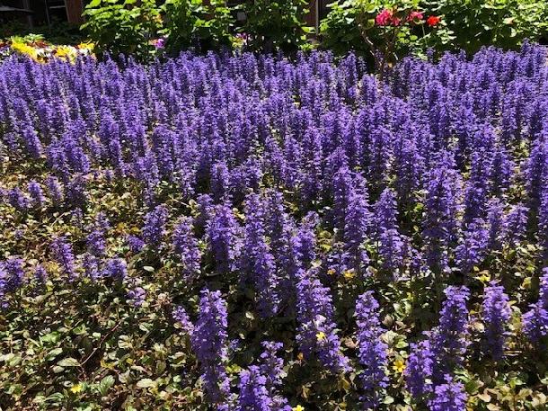 写真・図版 : 近畿大学付属病院の庭=撮影・筆者