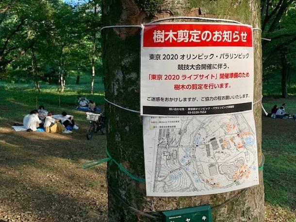 写真・図版 : パブリックビューイングのために剪定される木に付けられた「お知らせ」=2021年5月24日、東京都渋谷区・都立代々木公園