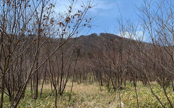 震災から10年が過ぎても再開できないシイタケ原木の生産