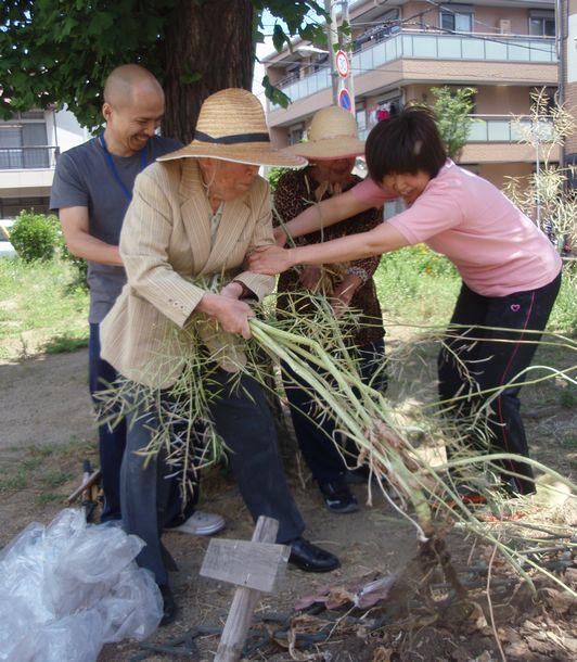 写真・図版 : ある高齢者施設の麦わら帽子の利用者と職員たち。花壇の菜の花を引っこ抜いて、みなで笑う。