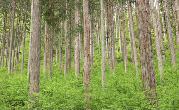 国産材生産増加が山を裸にする〜日本林業の深刻な課題