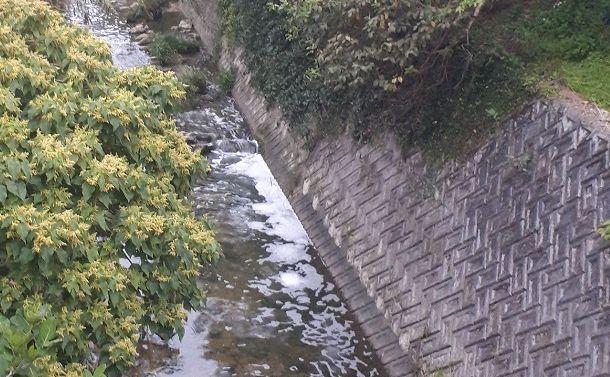 写真・図版 : 米軍普天間飛行場から出た泡消火剤は周辺の河川を汚染した=2020年4月11、沖縄県宜野湾市