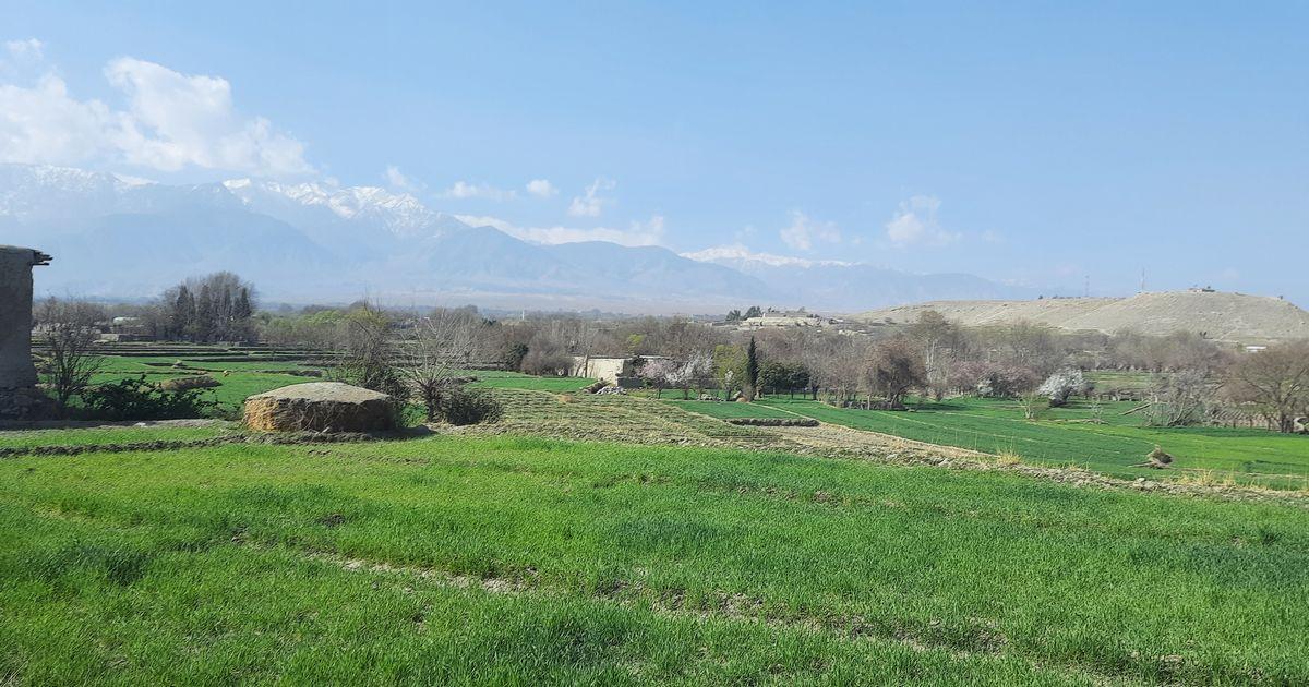 写真・図版 : アフガニスタン東部の農村風景(日本のNGO提供)©パスウェイズ・ジャパン