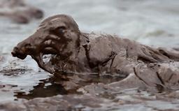 メキシコ湾の悲鳴 BPの原油流出事故で見えたもの